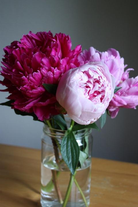 three pink peonies in a jar