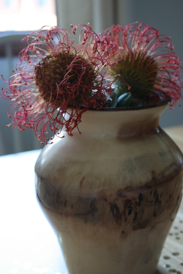 2 pincushion protea in a wooden vase