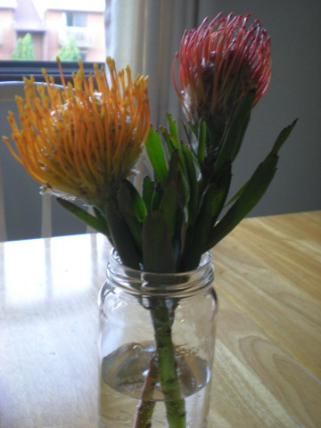 yellow and red pincushion protea in a clear jar