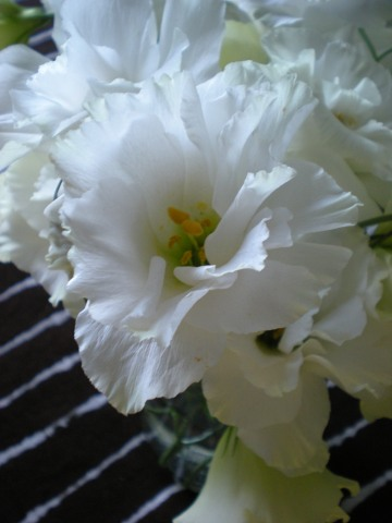 white lisianthus up close