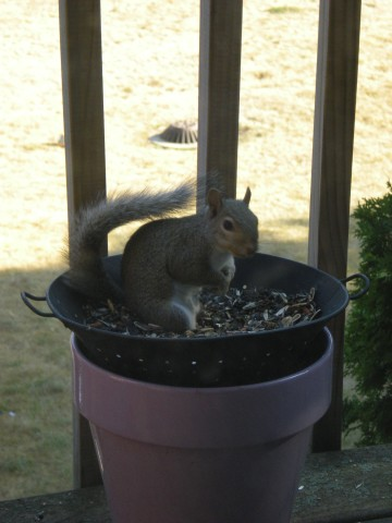 "a ""bird"" at the feeder"