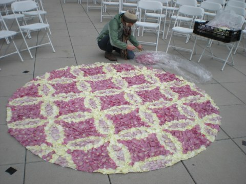 H filling bare spots on the rose petal carpet on a windy 40-degree afternoon